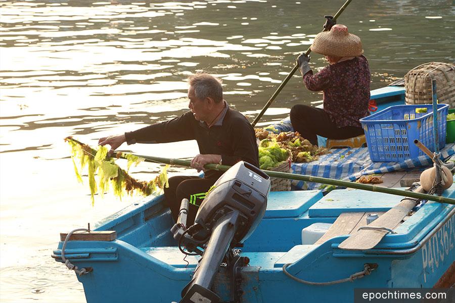 黃昏時分,鄉民在打撈海藻。(陳仲明/大紀元)