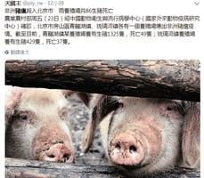 北京房山爆豬瘟 知情村民曝內情