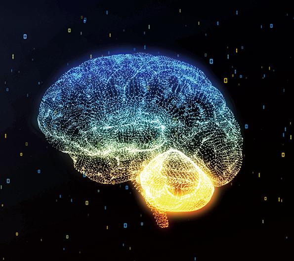 科學家最新發現人腦中一個其它靈長類和動物大腦中所沒有的隱藏區域。(Creative Commons)