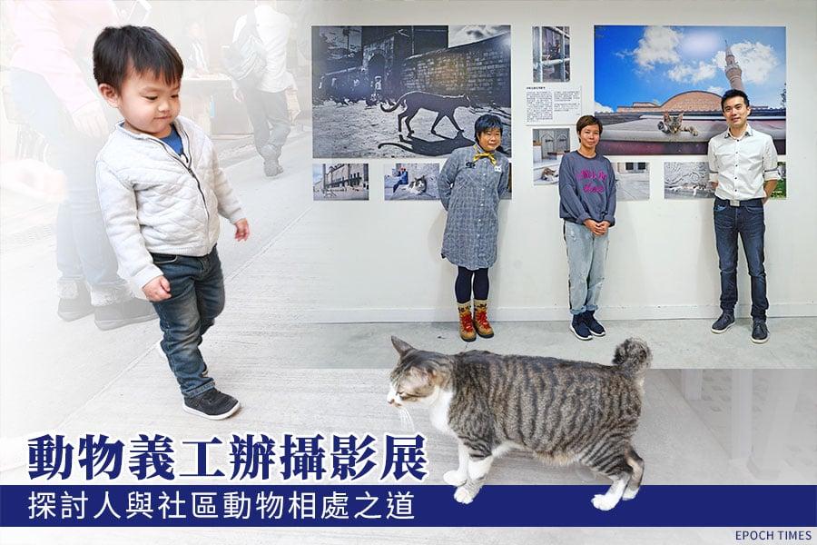 土耳其社區動物攝影展暨分享會舉辦的其中一個目標,是希望能將土耳其當地社區流浪貓的真實一面展現給大眾知道,也藉此機會讓市民了解對待流浪貓的正確態度和方式。(大紀元合成圖)