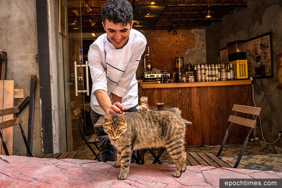 土耳其人與街貓互動。(受訪者提供)