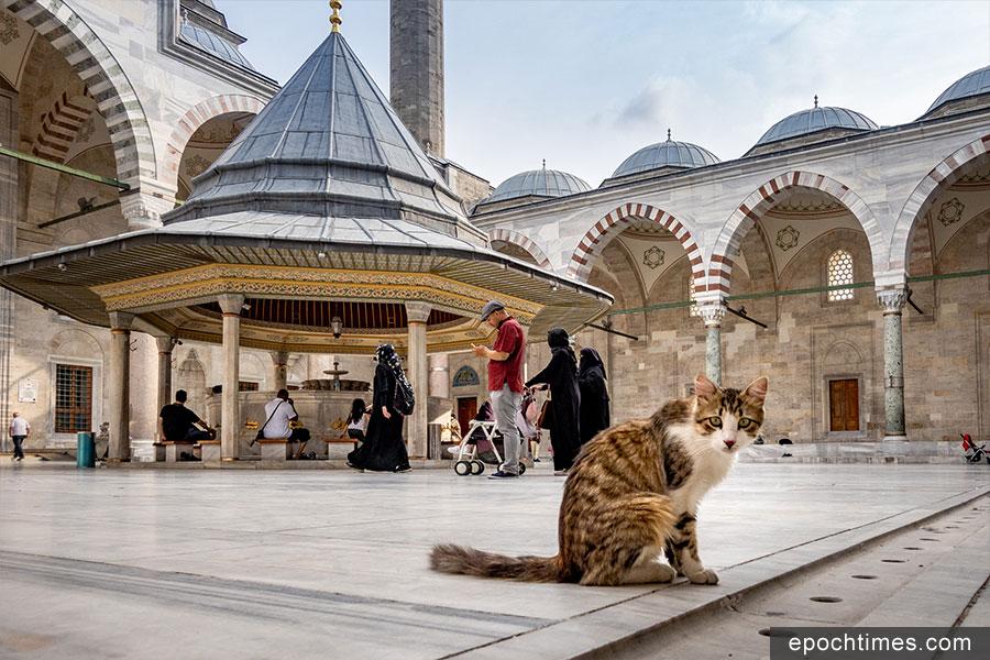 土耳其街頭的貓咪。(受訪者提供)