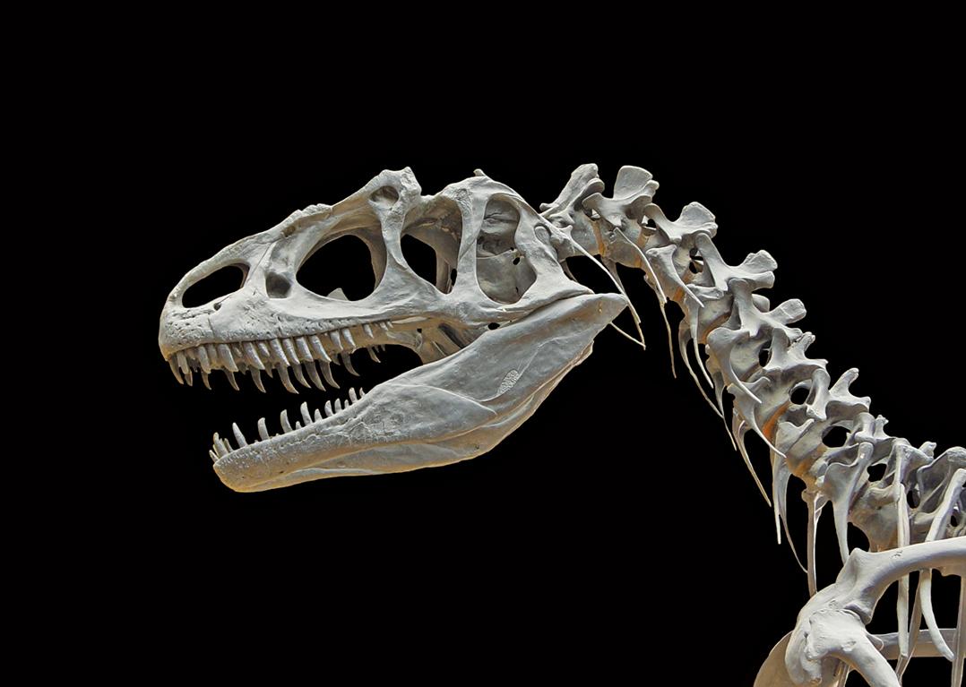 新發現的大型四足食草動物的化石,首次證明恐龍並非三疊紀時期唯一的大型動物。(Creative Commons)