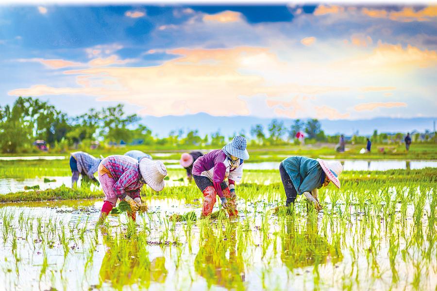 美食家以希的心思食意 實地走訪泰國米鄉