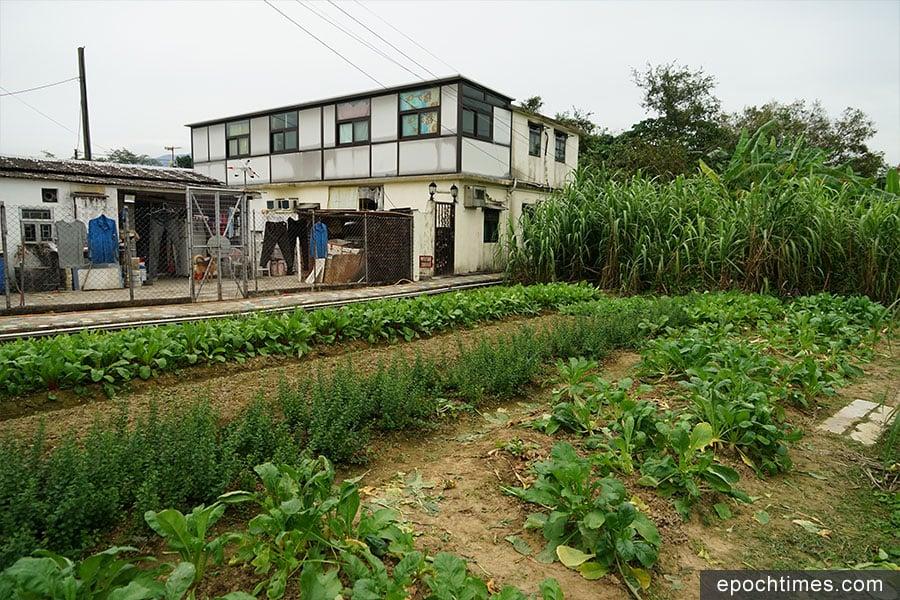 坪輋壁畫村中的有機菜田。(陳仲明/大紀元)