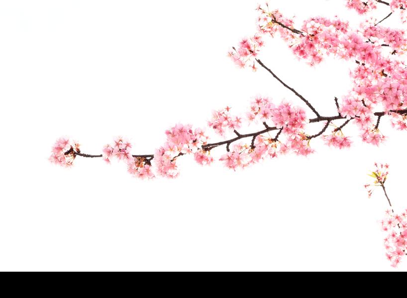 雪境荒村古韻長 (1)