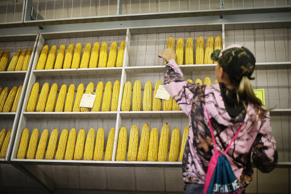 知情人士稱,除了汽車及大豆外,中共當局計劃重新購買美國粟米,以緩解中美貿易緊張局勢。圖為美國愛荷華州粟米。(Getty Images)