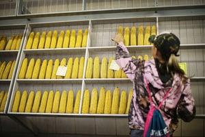 繼大豆及汽車後 傳北京明年採購美國粟米