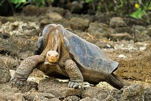 象龜基因助人類揭長壽奧秘