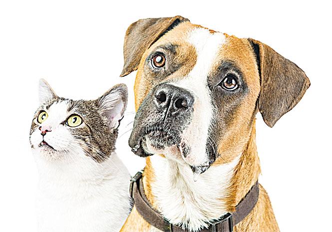 美國靈媒稱 能與寵物心靈溝通