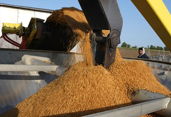 中共海關宣佈自12月27日起進口美國大米,這是自大陸加入世界貿易組織以來首次購買美國大米。圖為美國加州準備播種前的米種子。(Justin Sullivan/Getty Images)