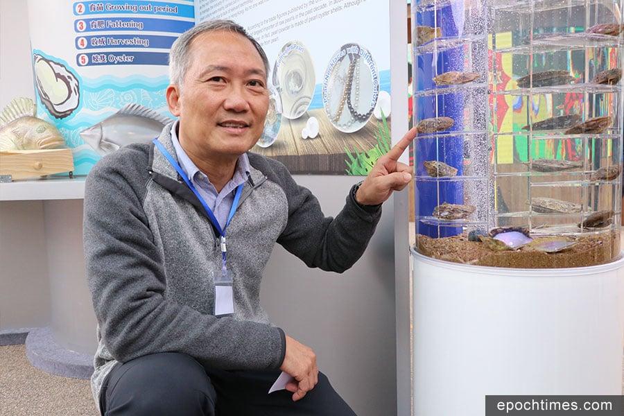 漁護署漁業主任邱寶明展示珍珠蚌。(陳仲明/大紀元)