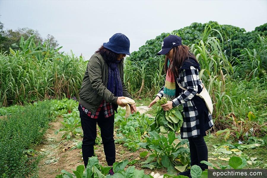 Janet與小女兒Samantha在田間拔蘿蔔。(陳仲明/大紀元)