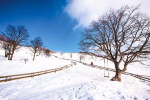 冬季去平昌邂逅自然與藝術