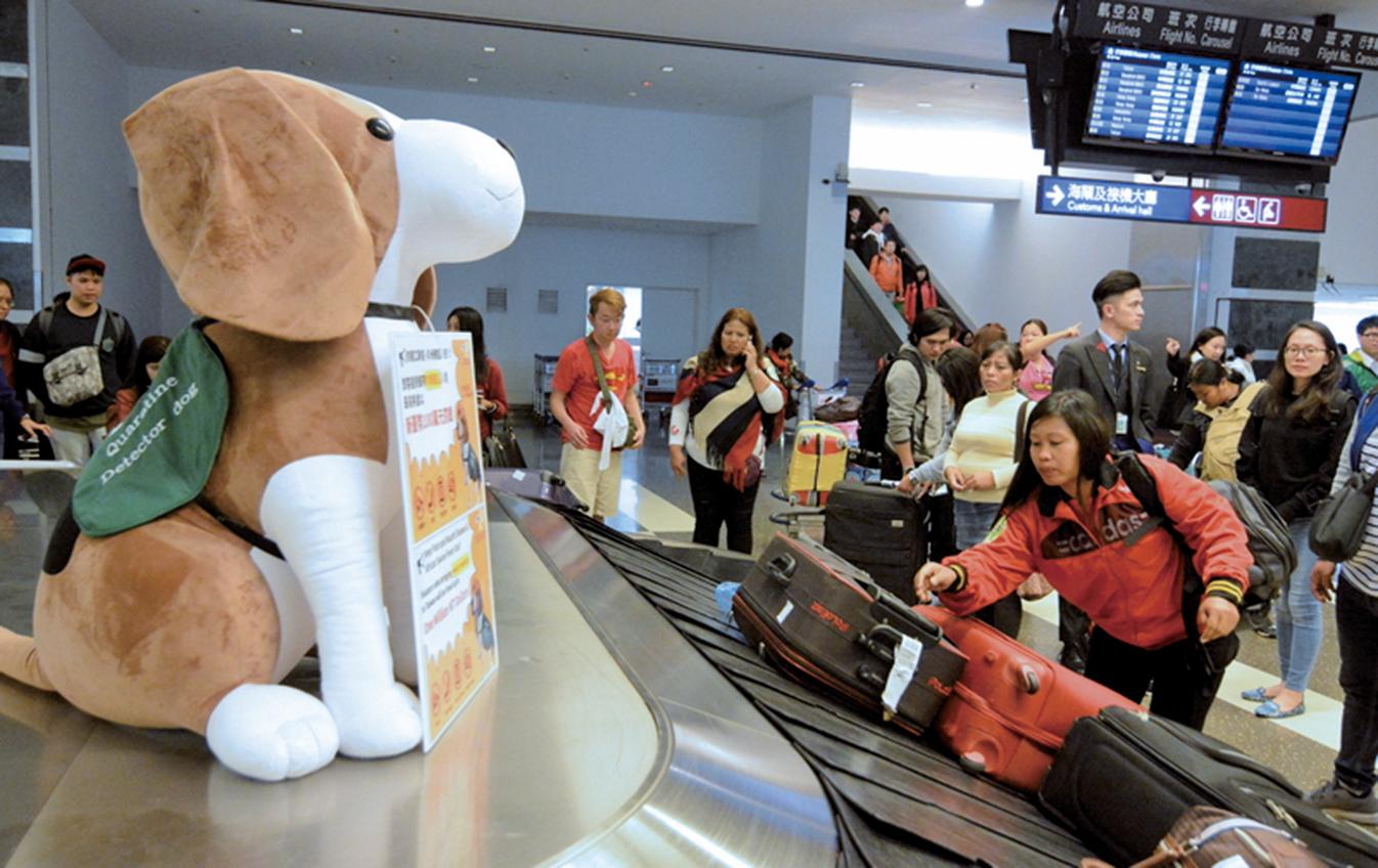 加強非洲豬瘟防疫,台灣農委會動植物防疫檢疫局等單位1月4日起在機場行李轉盤、發燒篩檢站、旅客行經重要據點擺設大型防疫犬布偶,提醒旅客不要攜帶違規肉品入境。(中央社)