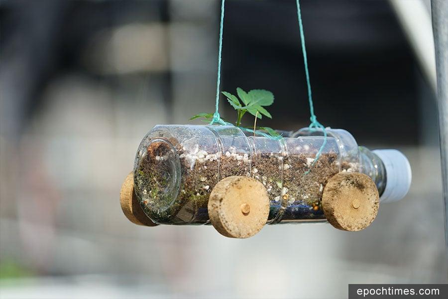 回收的膠樽,剪開後可以製成含羞草環保車。(陳仲明/大紀元)