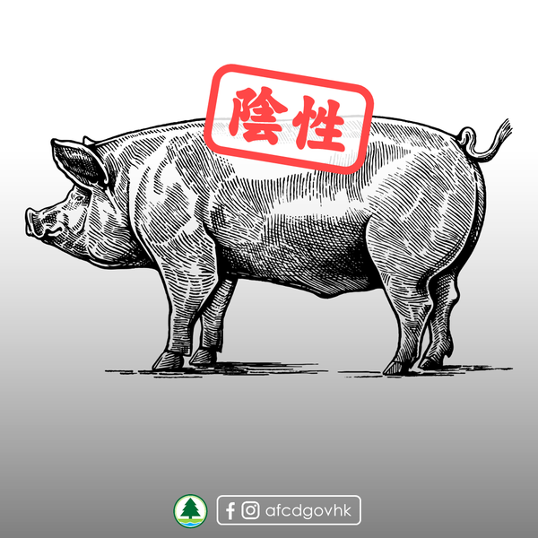 長洲海灘豬屍非洲豬瘟化驗結果呈陰性
