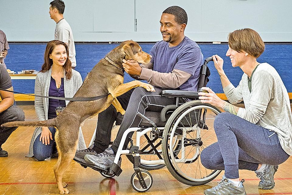 貝拉在魯卡斯工作的醫院成為「狗醫生」。