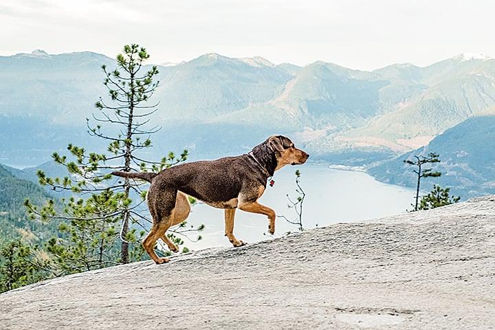 貝拉回家冒險過程中,可以見到牠如何從一隻缺乏野外求生經驗的寵物狗,漸漸找回動物的原始本能,也可看到牠如何重拾流浪狗技能。