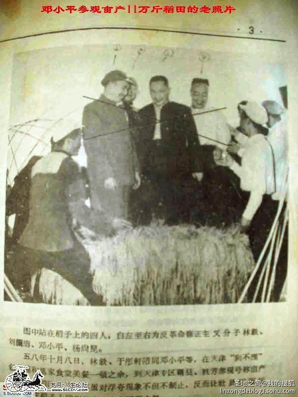還有一幅鄧小平等人站在稻穗上的照片。(資料圖片)