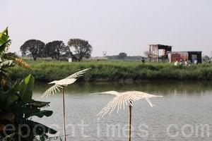 落塘源野藝術節 探討大生圍生態保育