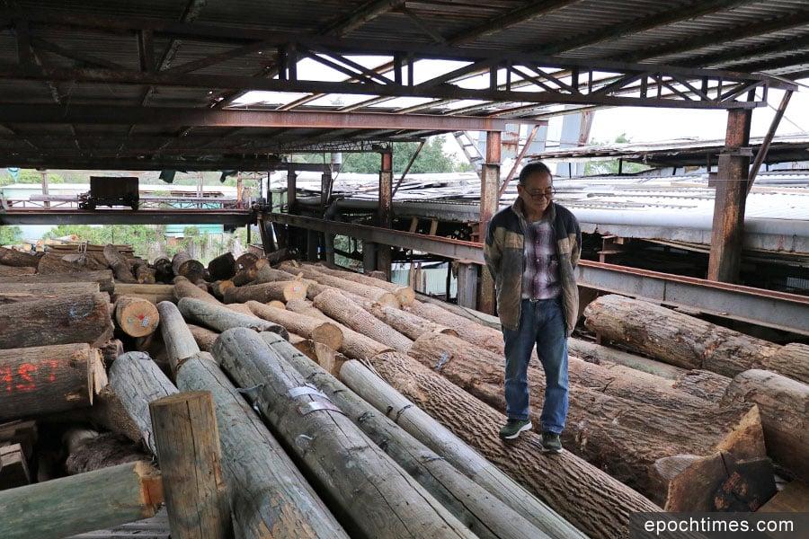 已到古稀之年的權哥,還如年輕時一樣靈巧,在堆疊兩層樓高的木材間穿梭。(陳仲明/大紀元)