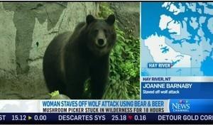 加國女子採蘑菇被狼跟蹤12小時 黑熊救了她