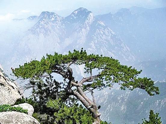 西嶽華山(Ianz on Flickr /維基百科)