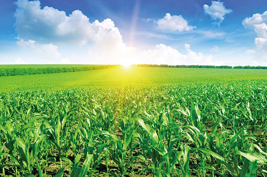 這一片恬然自得的田園風光,該不會是渾然天成的吧?背後的汗水浸潤成痕,我們真的看見了嗎?(fotolia)