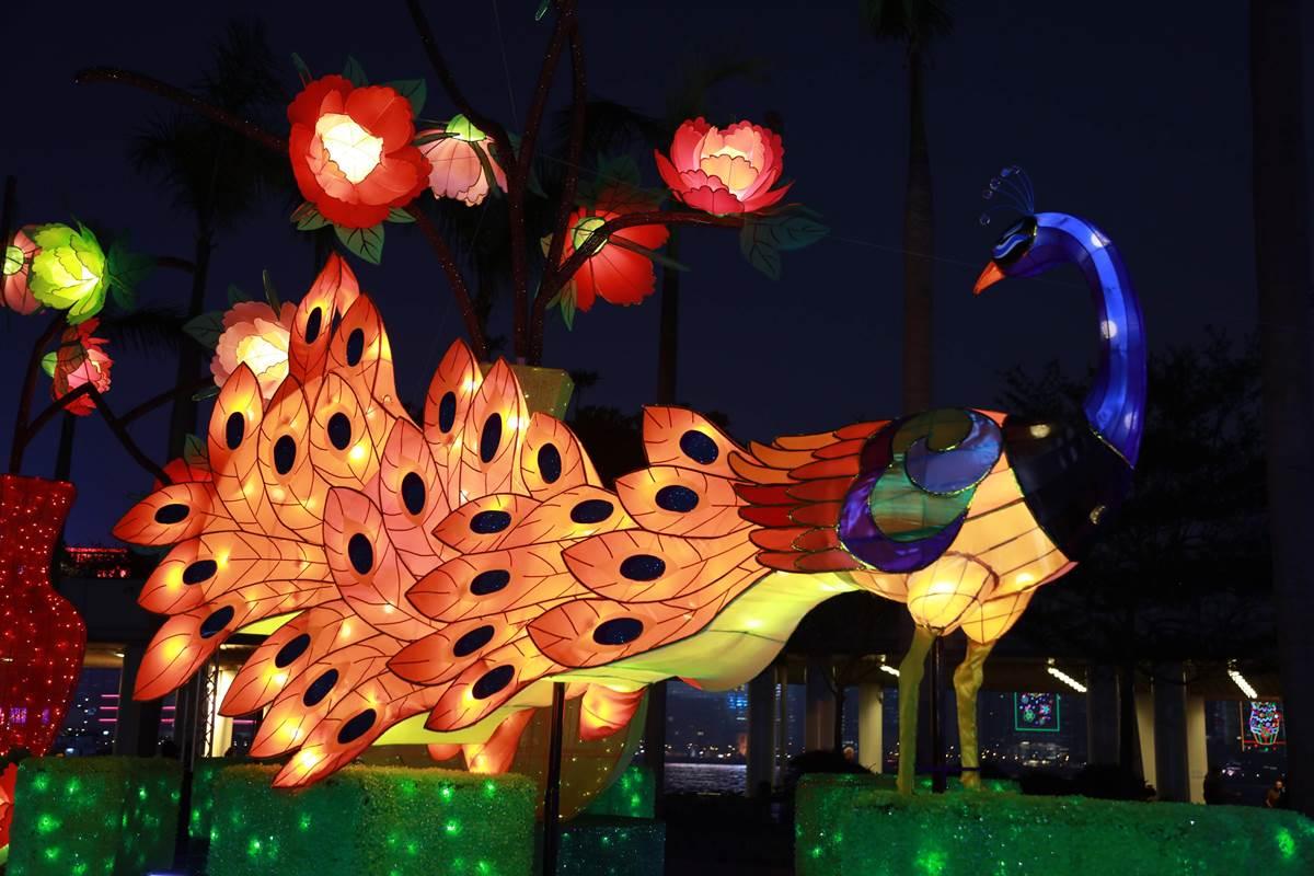 文化中心露天廣場舉行的專題綵燈展「雀屏春瑞耀香江」, 展出多款孔雀造型綵燈。(政府新聞處提供)