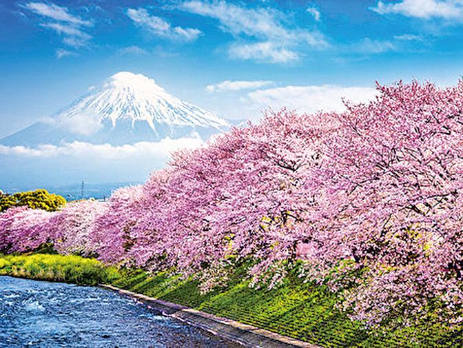 每逢日本賞櫻季節,是眾多旅客春天赴日旅遊的時機點。