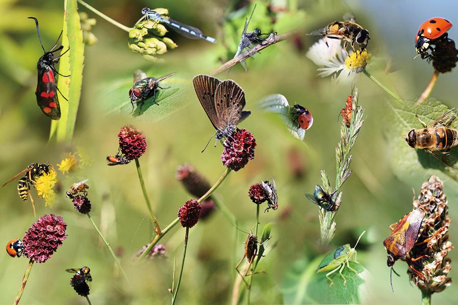 昆蟲百年內恐滅絕 人類和生態系將吞苦果