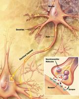 合成新藥有望治療阿兹海默症