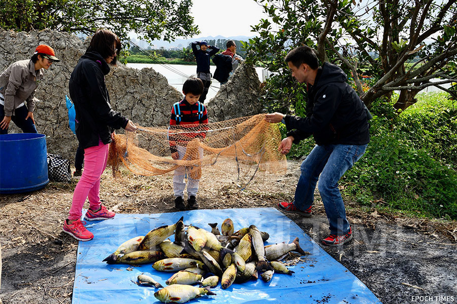 【教育專題】新界魚塘節受歡迎 親子實地體驗魚塘生態保育