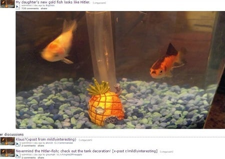 近日,社交網站Reddit有用戶上傳了一張十分有趣的金魚照片,並稱金魚唇部的斑紋酷似希特拉的小鬍子,十分有趣。(reddit網頁截圖)