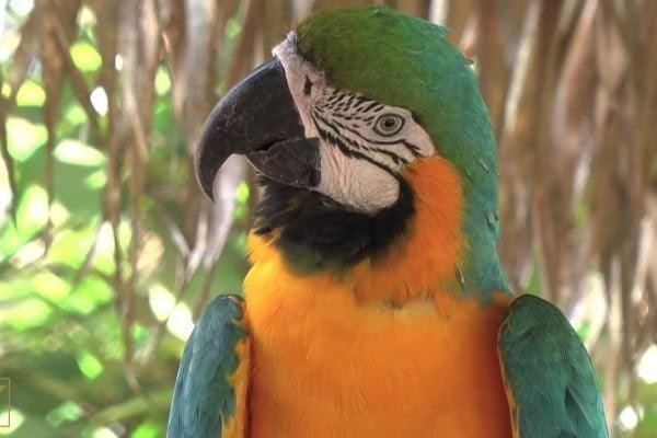 研究:鳥的大腦不簡單 複雜程度出人意料