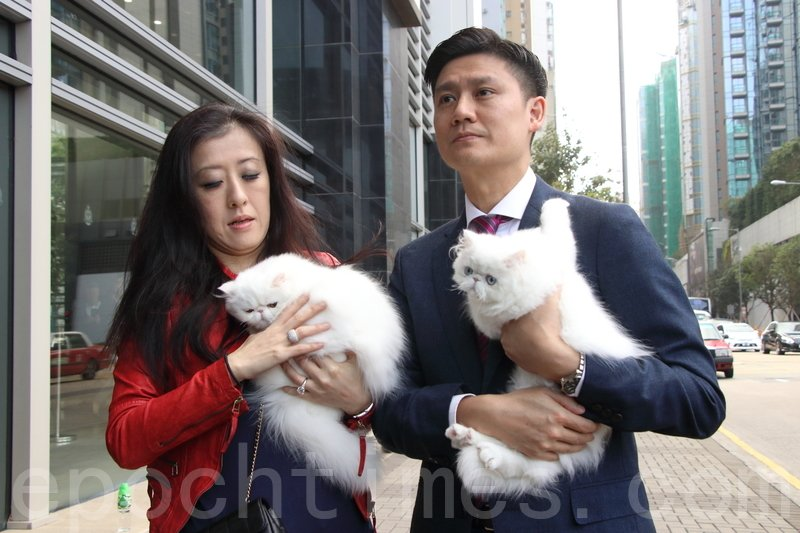 台灣貓舍負責人張小姐在譚文豪議員陪同下到海關總部報案,隨後再帶兩隻曾被偷走的貓到警署影相調查。(蔡雯文/大紀元)