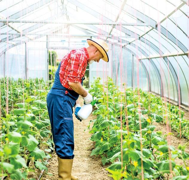 蔬菜養分喪失80% 現代種植讓我們失去甚麼?