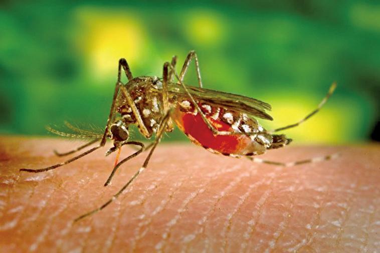 有研究人員建立了一個高度隔離的實驗室,希望通過基因編輯的方式讓裏面的蚊子滅絕。(Creative Commons)