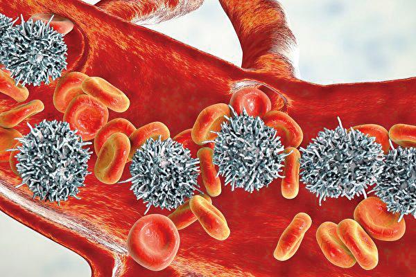 近期發布的一份研究報告稱,研究者們找到了一種藥物組合,可治療由衰老引起的致命疾病。(ShutterStock)