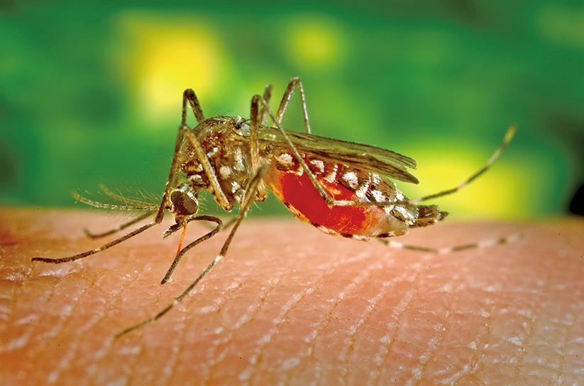 用基因編輯讓蚊子滅絕可行嗎?