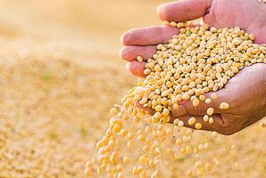 中共購買美國大豆無下文