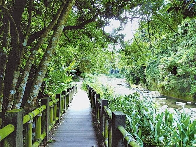 蓬萊溪的自然生態園區。