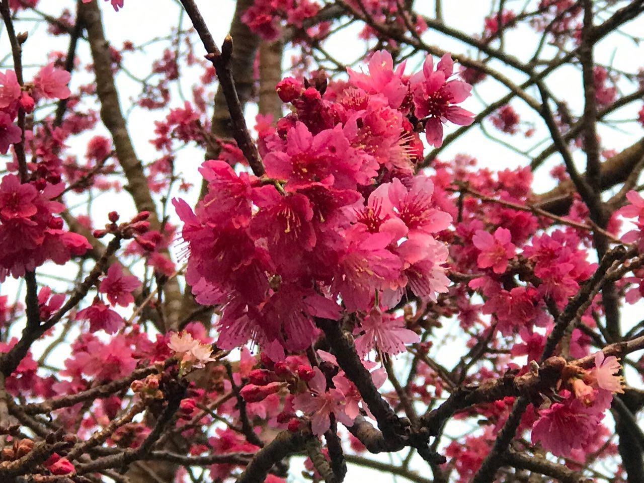 「驚蟄」時節正值春暖花開時期,不妨趁著假期全家人一起到郊野賞花。(林怡/大紀元)