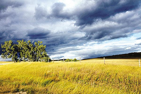 離離原上草,一歲一枯榮(pixabay)