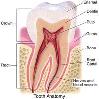 新發明利用蛋白質重塑牙釉质