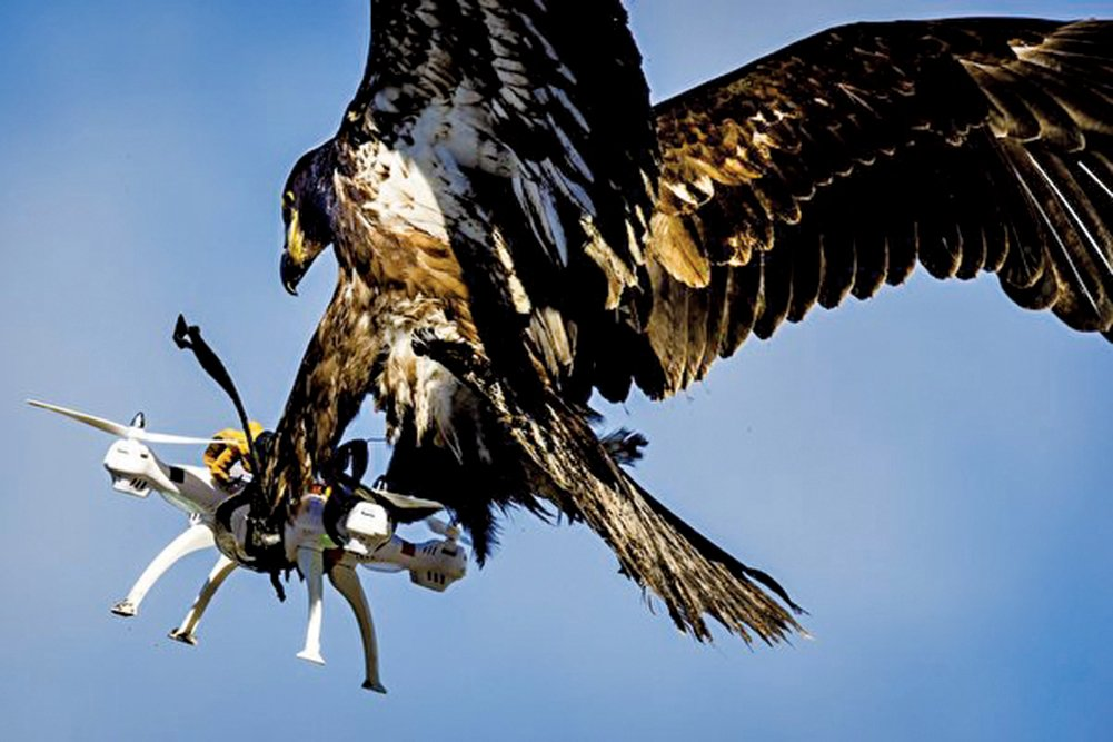 2016年3月7日,荷蘭一家公司訓練的老鷹在空中抓住無人機。(Getty Images)