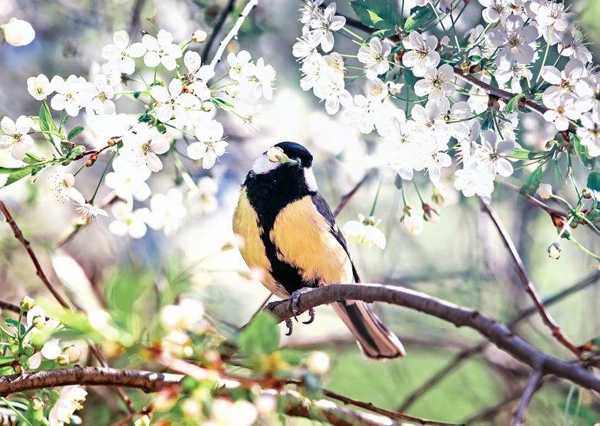 心靈陽光  :  春