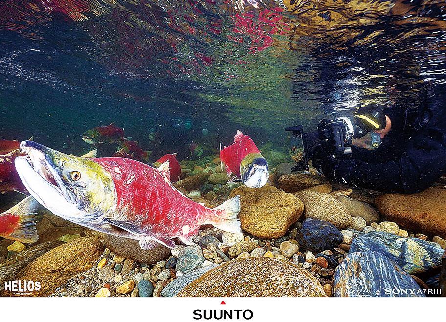 吳永森穿著潛水衣(畫面右側)趴在低溫的水下拍攝。(吳永森臉書)