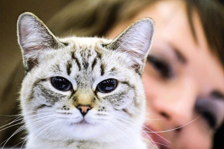 與寵物貓約定來生做母子 台灣女見證奇蹟